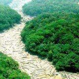 desmatamento no brasil arvores