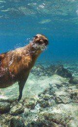 um passeio pelas ilhas galapagos