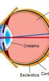 o olho humano como funciona