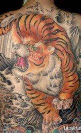 fotos de tatuagens masculinas de tigres