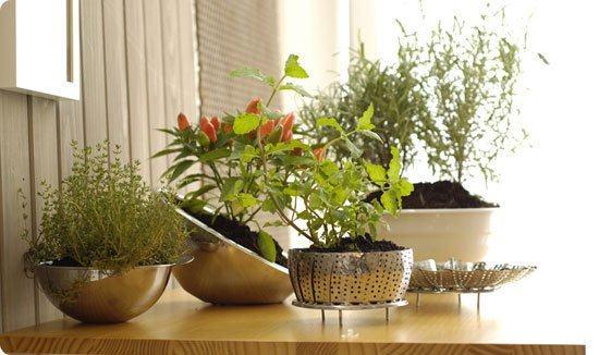 Decoração com plantas para apartamentos : Ambiente verde