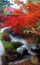 decoração de jardins japoneses