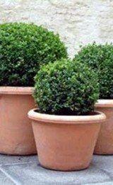 imagens de vasos de plantas