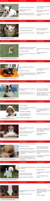 raças de cachorros pequenos e nomes